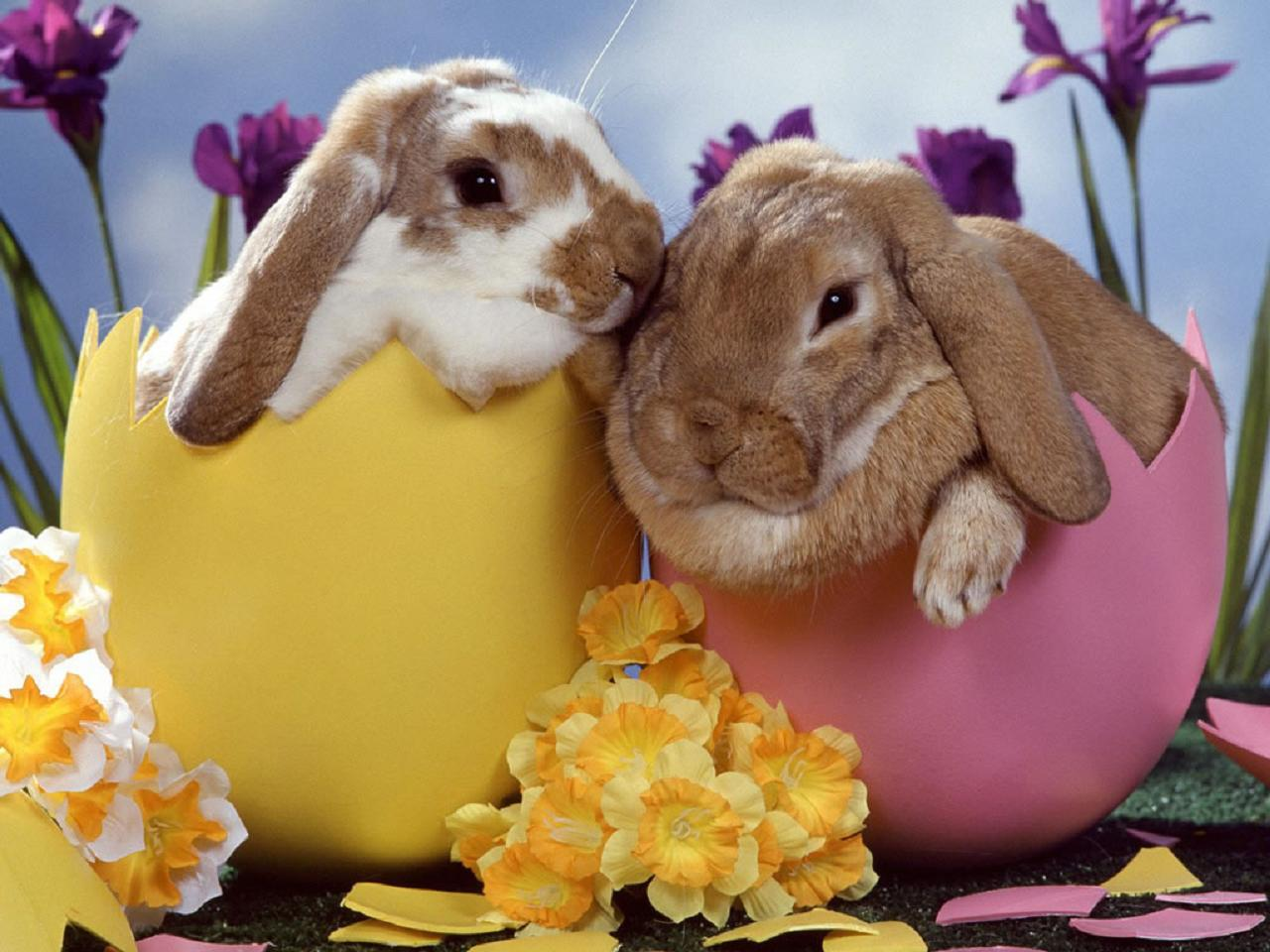 cute bunnies cute rabbits cute animals easter