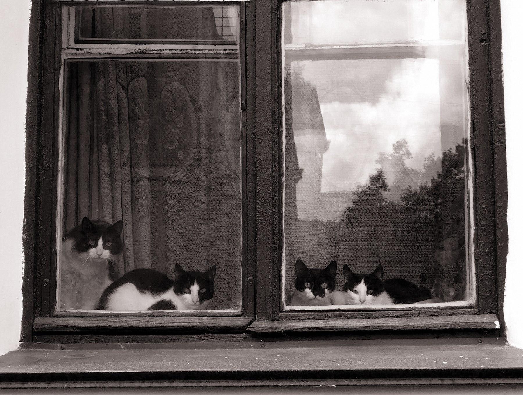 00 Olga Ilyina. The Masters of This House. 2015