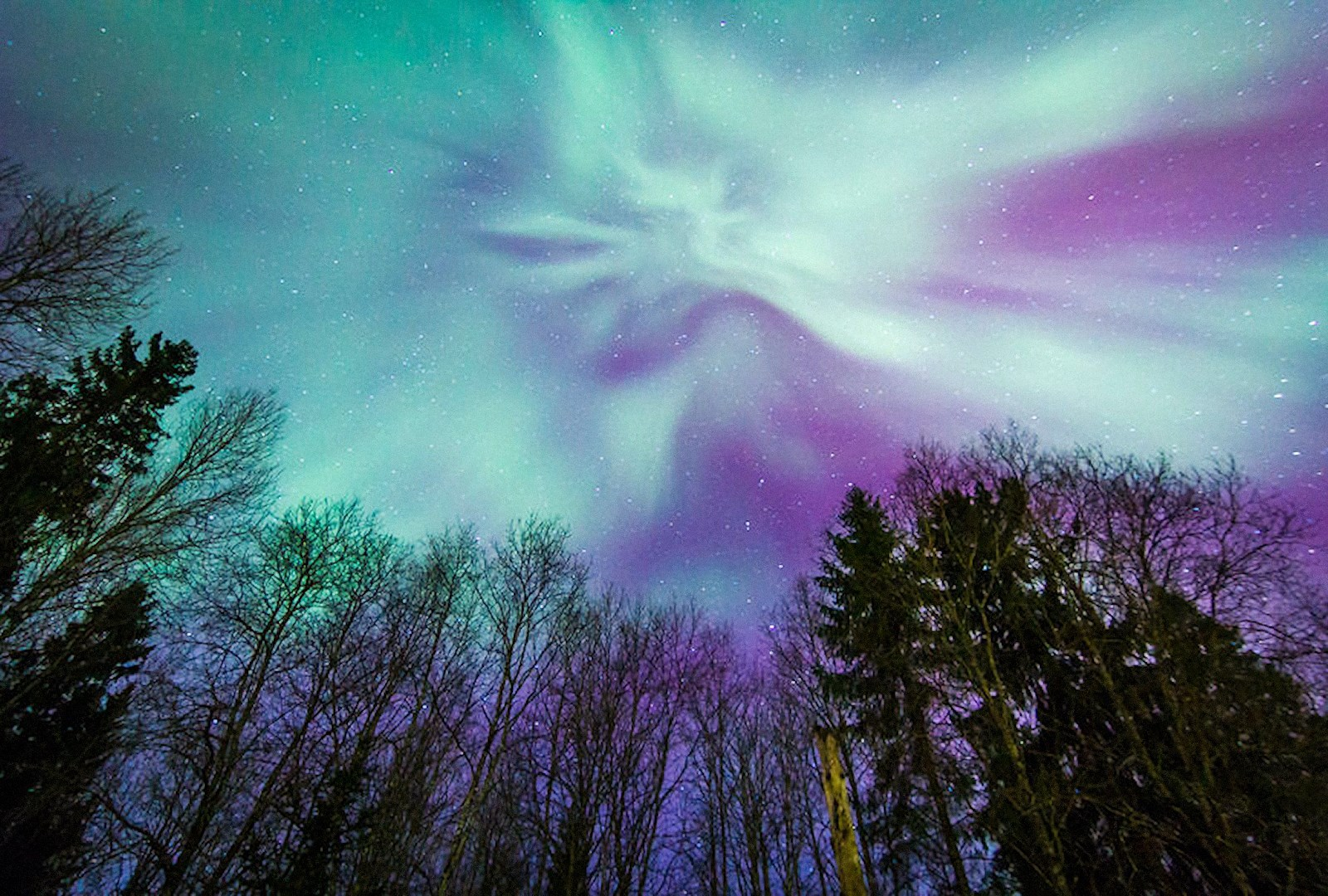 00 Viktor Olkhovsky. Aurora Borealis in Leningrad Oblast 1. 2015
