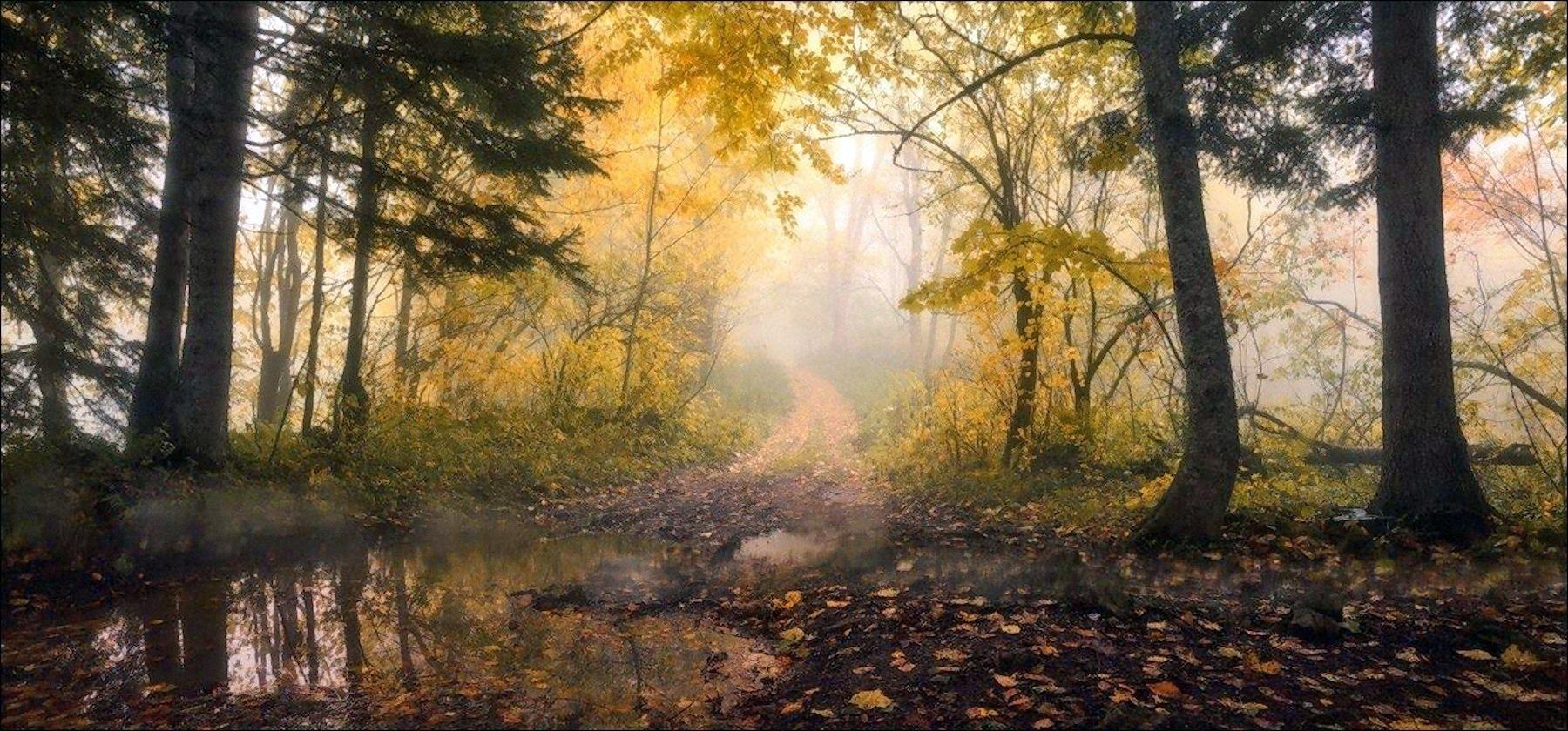 00 Vlad Sokolovsky. Autumn forest. Adygea, Russia. 2015